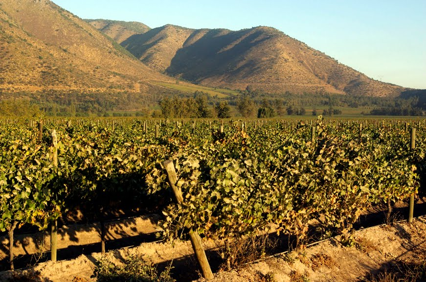 Cabernet Sauvignon Vineyards at Carmen Estate, Alto Jahuel, Maipo Valley, Chile